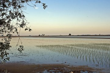 05.Xijonenca-PacoCremades-campos de arroz